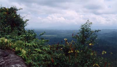 Jungle in Temburong - the eastern part of Brunei